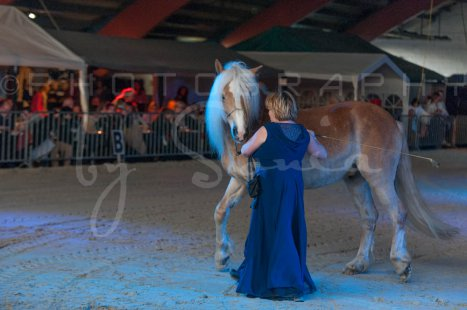 salon-du-cheval--hannut-1507_25979737170_o