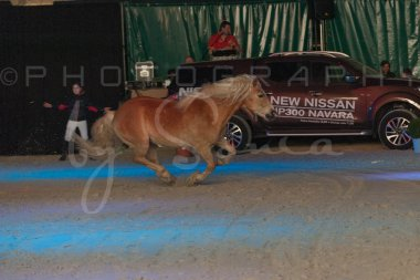 salon-du-cheval--hannut-1510_25649881383_o