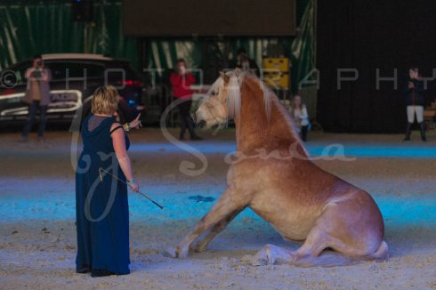 salon-du-cheval--hannut-1518_26252586995_o
