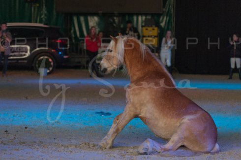 salon-du-cheval--hannut-1519_26252586695_o