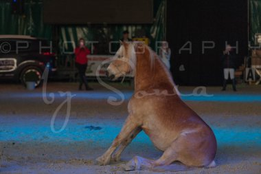salon-du-cheval--hannut-1520_26186313621_o