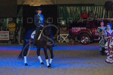 salon-du-cheval--hannut-1523_26160152072_o