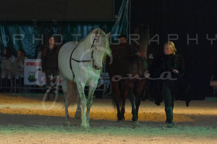 salon-du-cheval--hannut-1541_26252584685_o