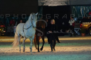 salon-du-cheval--hannut-1543_25649880933_o