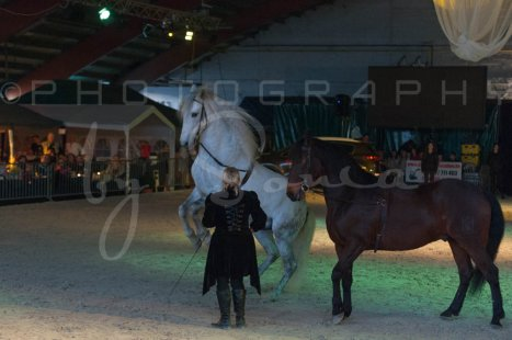 salon-du-cheval--hannut-1544_26160150232_o
