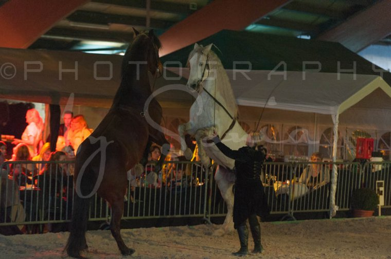 salon-du-cheval--hannut-1552_26186310411_o