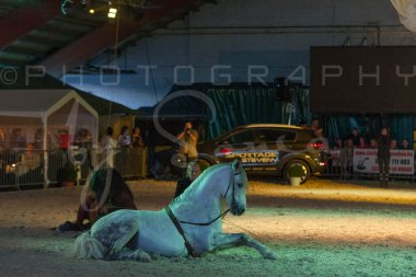 salon-du-cheval--hannut-1559_25649907443_o