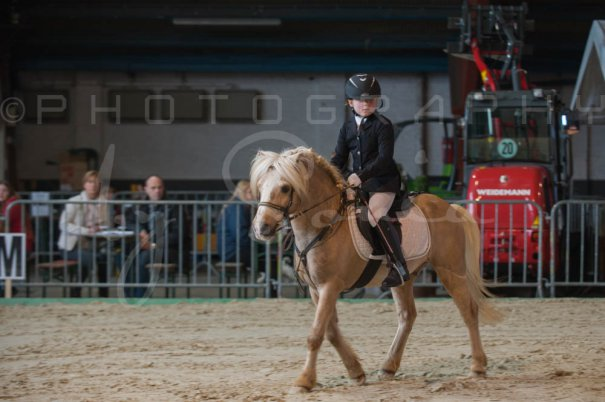 salon-du-cheval--hannut-156_26252749815_o