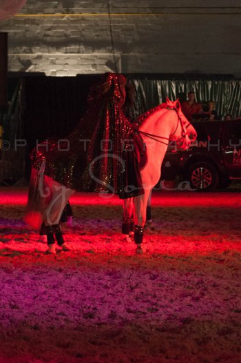 salon-du-cheval--hannut-1592_26252555635_o