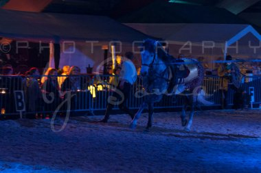 salon-du-cheval--hannut-1643_26160140922_o