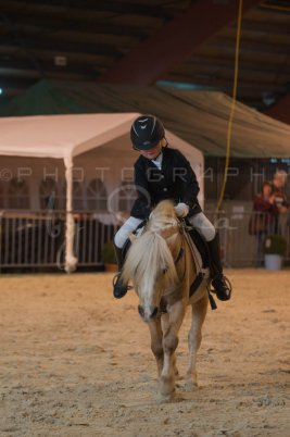 salon-du-cheval--hannut-173_26252749225_o