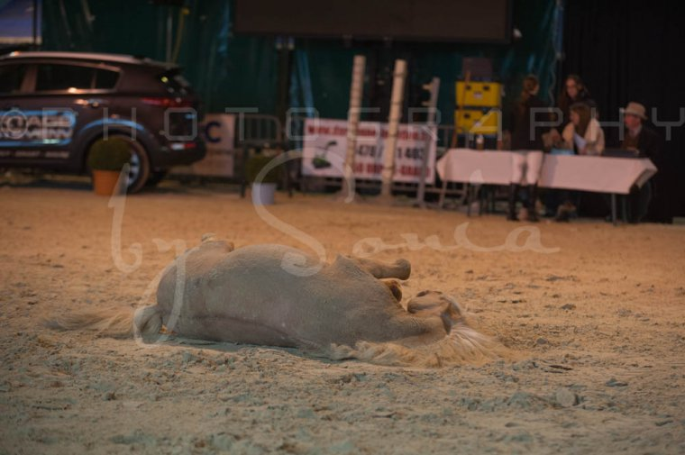 salon-du-cheval--hannut-176_26252748665_o