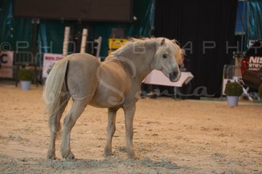 salon-du-cheval--hannut-179_25650072473_o
