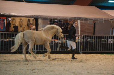 salon-du-cheval--hannut-181_25979896710_o