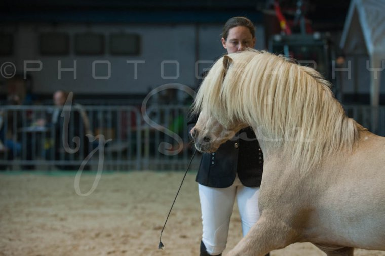 salon-du-cheval--hannut-184_26186475891_o