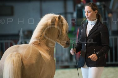 salon-du-cheval--hannut-185_25647970324_o