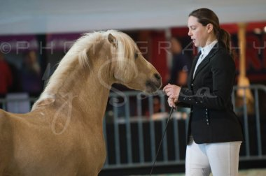 salon-du-cheval--hannut-186_26160313042_o