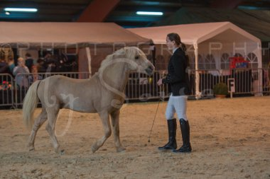 salon-du-cheval--hannut-188_26226821106_o