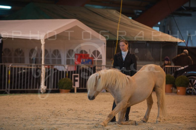 salon-du-cheval--hannut-192_25979894320_o
