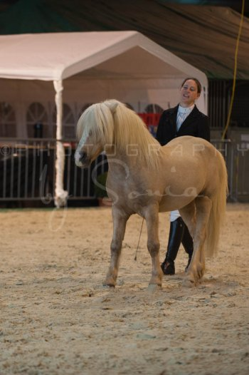 salon-du-cheval--hannut-193_26226820206_o