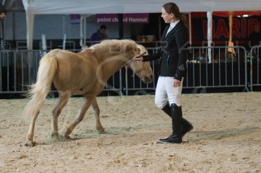 salon-du-cheval--hannut-198_25979893420_o