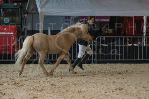 salon-du-cheval--hannut-218_26252744105_o