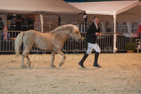salon-du-cheval--hannut-222_25650068473_o