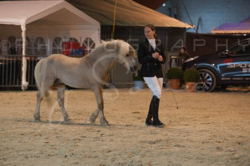 salon-du-cheval--hannut-223_26186471751_o