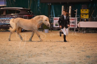 salon-du-cheval--hannut-231_26226817596_o