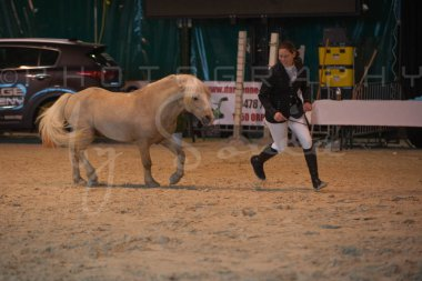 salon-du-cheval--hannut-232_26252742265_o