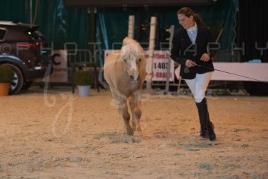salon-du-cheval--hannut-233_26252742065_o