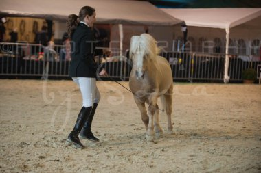salon-du-cheval--hannut-237_25647964674_o