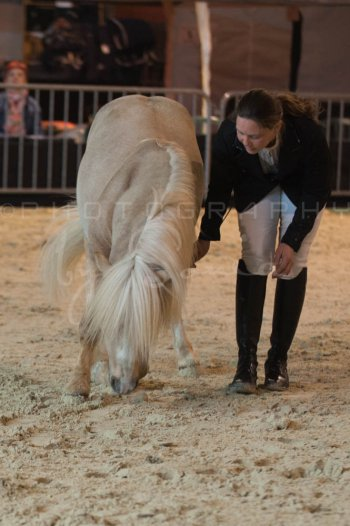 salon-du-cheval--hannut-247_26252740885_o