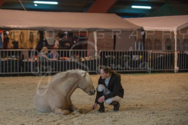 salon-du-cheval--hannut-248_25979889670_o