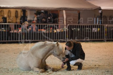 salon-du-cheval--hannut-249_26226646426_o