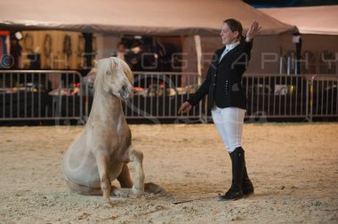 salon-du-cheval--hannut-258_25647962854_o