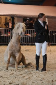 salon-du-cheval--hannut-263_25979887660_o