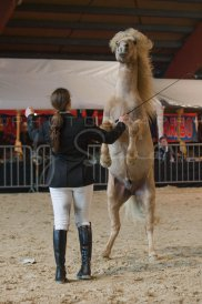 salon-du-cheval--hannut-276_26186467101_o