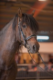 salon-du-cheval--hannut-292_25650062733_o