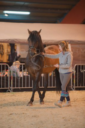 salon-du-cheval--hannut-295_26160302902_o
