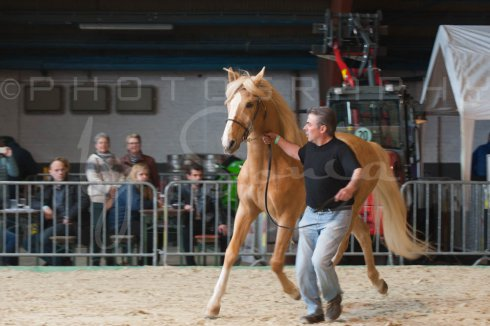 salon-du-cheval--hannut-305_25649895843_o