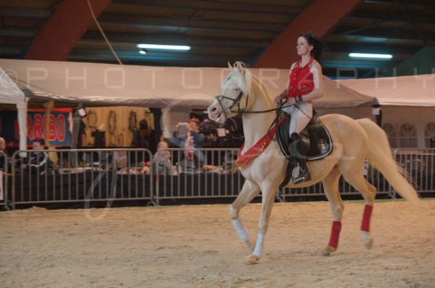 salon-du-cheval--hannut-308_25647959214_o