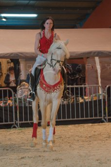 salon-du-cheval--hannut-320_26252735285_o