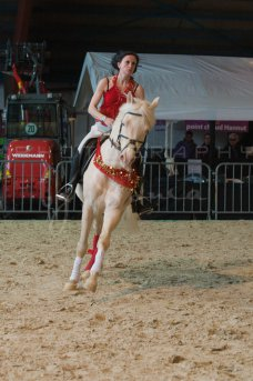 salon-du-cheval--hannut-338_25979883570_o
