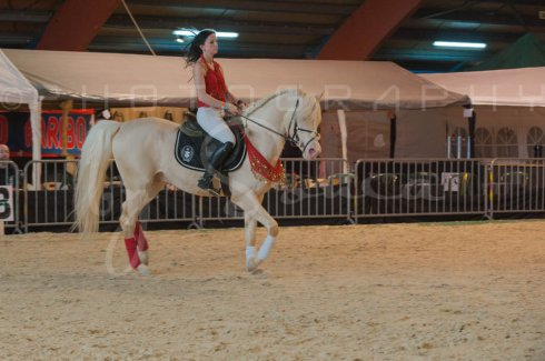 salon-du-cheval--hannut-368_26226808086_o
