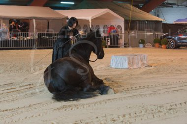 salon-du-cheval--hannut-378_25647956054_o