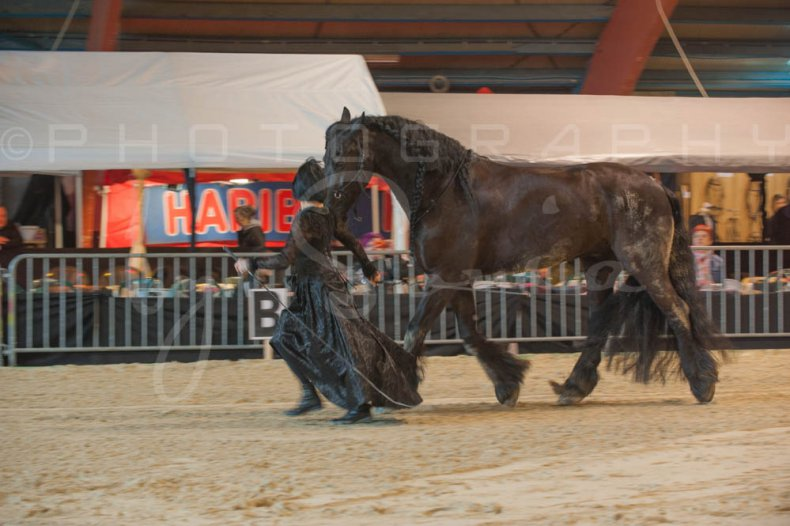 salon-du-cheval--hannut-406_25979881510_o