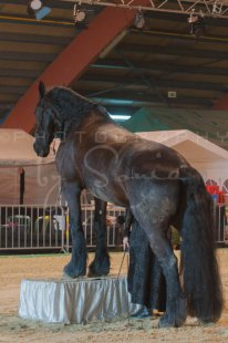 salon-du-cheval--hannut-460_25647954934_o