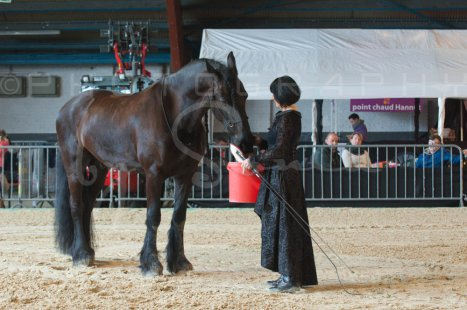 salon-du-cheval--hannut-465_26226806386_o