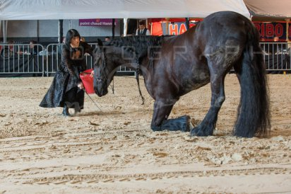 salon-du-cheval--hannut-467_26252731695_o
